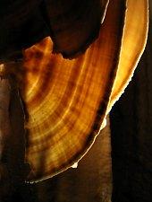 Stanul Ciuții, Photo: Carmen Avram