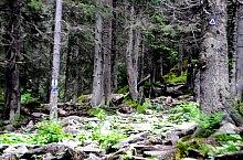 Curba Soacrei - Gențiana lodge hiking trail, Retezat mountains, Photo: WR