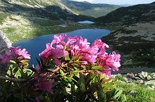 Anna tó, Retyezát hegység., Fotó: Mihai Păcuraru