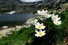 Bucura lake, Retezat mountains·, Photo: Mihai Păcuraru