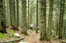 Az erdőn át, Fotó: Silviu Vulcan