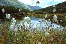 Florica lake, Photo: Wilhelm Scherz