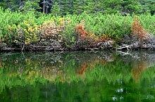 Lake between trees, Retezat mountains·, Photo: Sorin Nicolas
