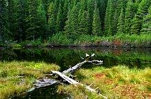 Lake between trees, Retezat mountains·, Photo: Andrei Pop