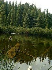 Lake between trees, Retezat mountains·, Photo: Mihai Bursesc