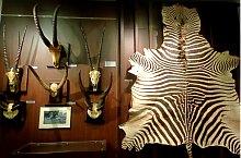 August von Spiess Hunter Museum, Sibiu·, Photo: Ovidiu Sopa