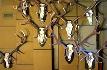 August von Spiess Hunter Museum, Sibiu·, Photo: Muzeul Brukenthal