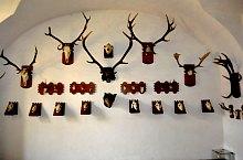 Muzeul Stiintele Naturii, Sighetu Marmatiei, Foto: WR