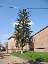 Cetatea Medievala, Targu Mures, Foto: Takács Tibor