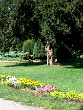 Botanikus park, Temesvár., Fotó: Ovidiu Bobu