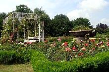 Rózsapark, Temesvár., Fotó: Ovidiu Nicorici