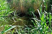 Lacul Pisicii, Foto: Ana Maria Catalina